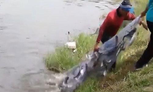 Hai người trúng đậm mẻ cá khi quăng chài