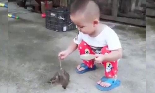 Cậu bé mớm thức ăn cho đàn chim