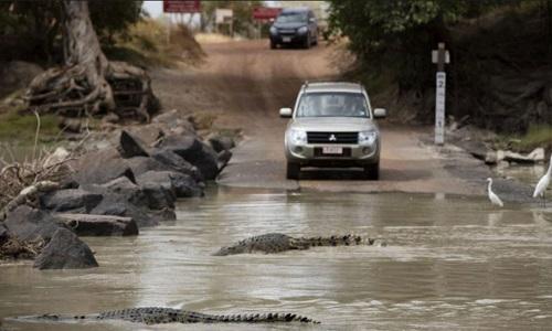 Con đường tử thần chạy qua sông cá sấu