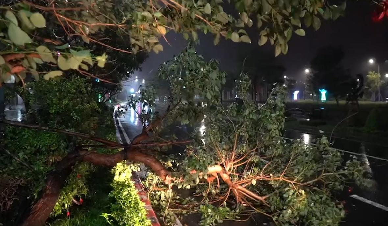 Video cây đổ Tuy Hòa
