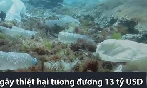 Nhựa nhiều gấp 7 lần cá con ở biển Hawaii