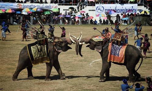 Hơn trăm con voi tham gia lễ hội