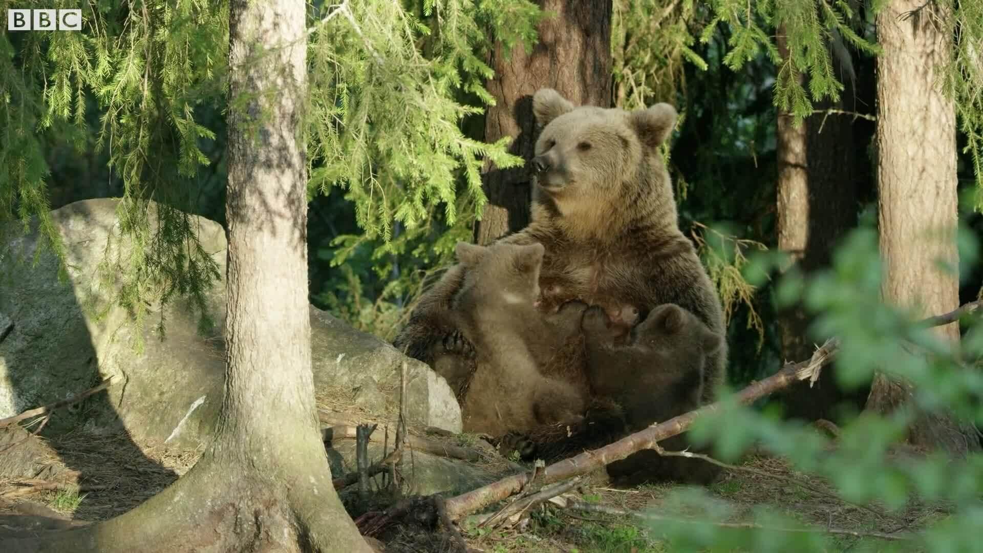 Gấu con tinh nghịch chơi đùa trước ống kính máy quay