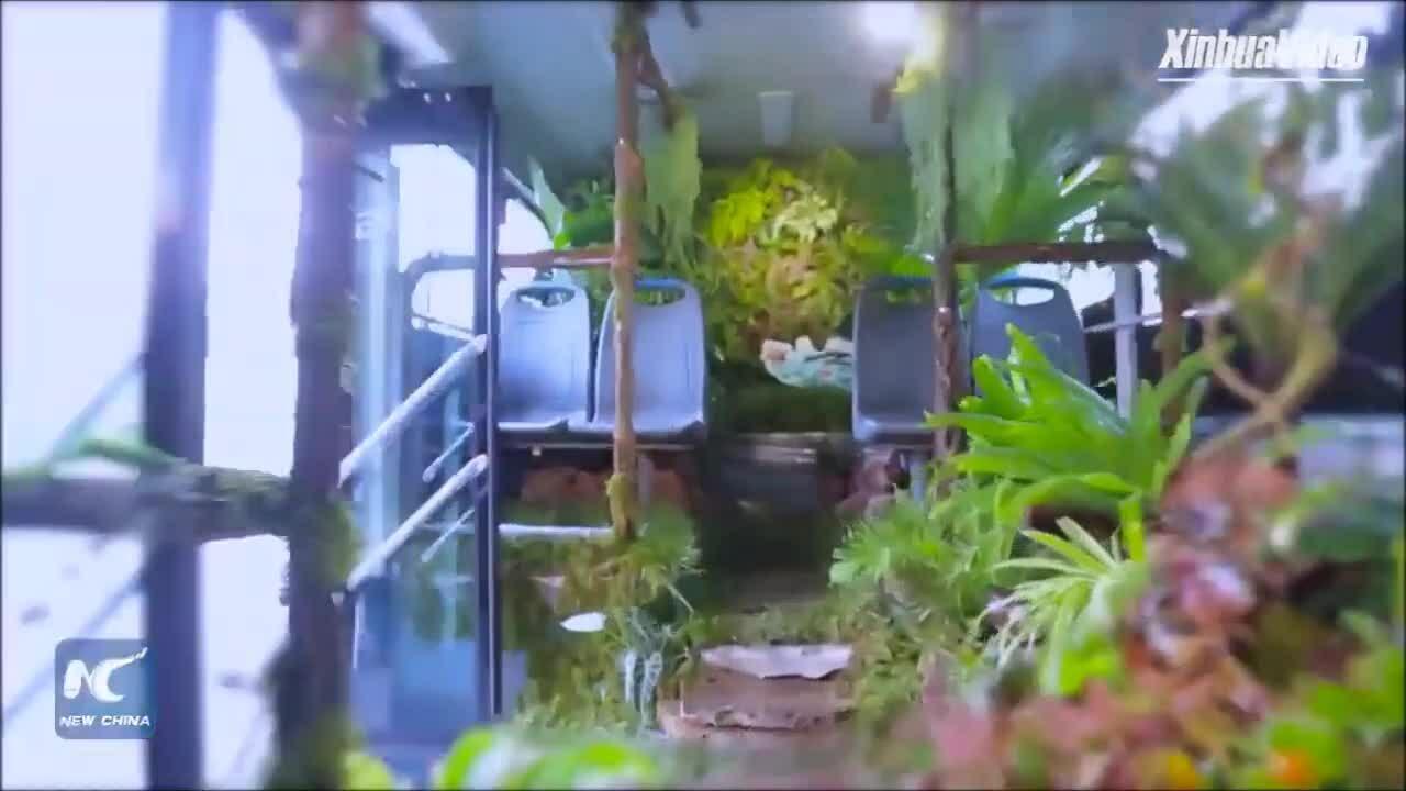 Xe buýt Trung Quốc biến thành rừng cây di động