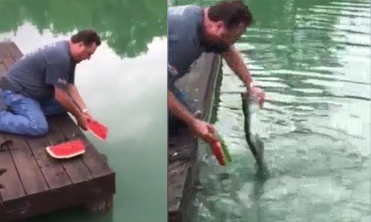 Dùng dưa hấu làm mồi bắt cá dưới sông