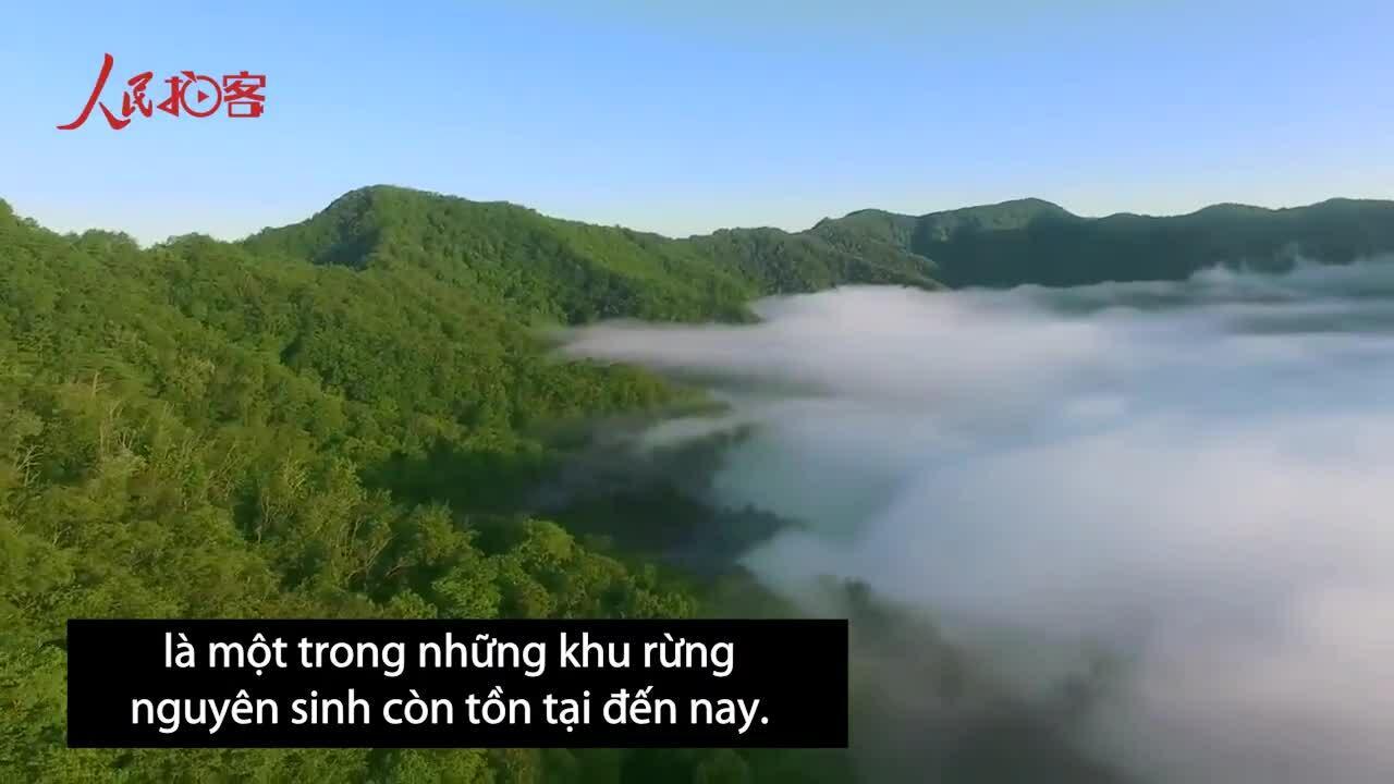 Rừng nguyên sinh hàng nghìn ha chìm trong biển mây