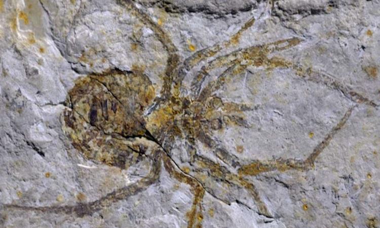Hóa thạch tôm hùm đất đánh lừa các nhà nghiên cứu