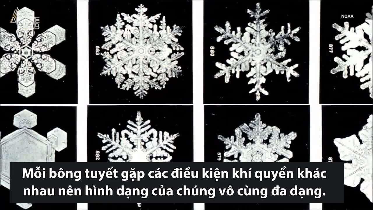 Nguyên nhân mỗi bông tuyết có hình dạng khác nhau