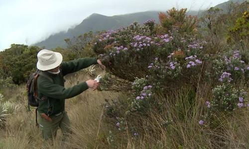Nhà sinh vật học dành 30 năm sưu tầm thực vật