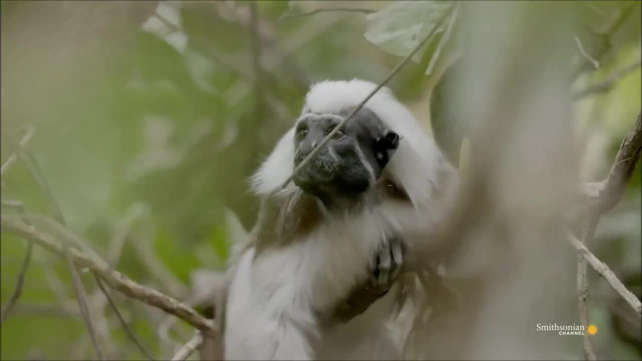 Khỉ cái đuổi kẻ mới đến vì sợ bị tranh bạn tình