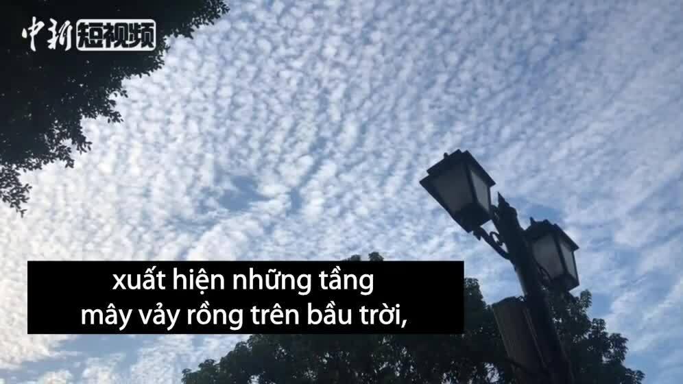 Mây vảy rồng hiếm gặp tại Trung Quốc