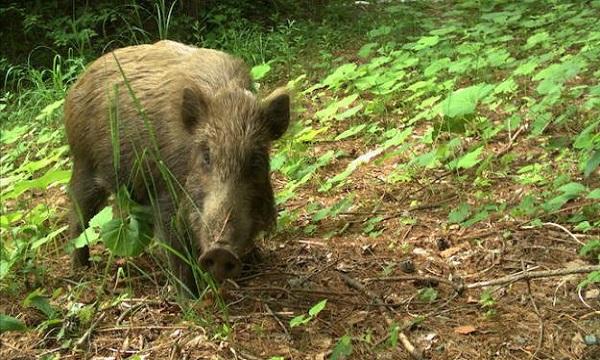 Động vật sinh sôi ở khu rừng phóng xạ