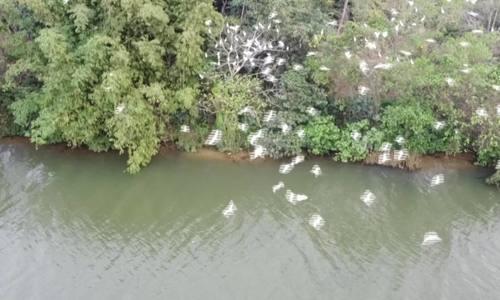 Hàng nghìn chim cò về sông Hương trú ngụ