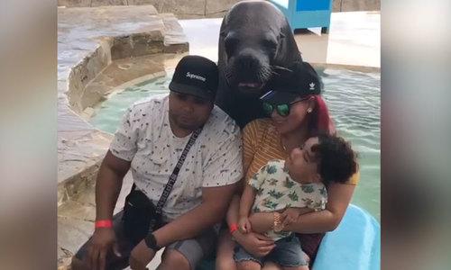 Hải cẩu tạo dáng chuyên nghiệp chụp ảnh cùng du khách