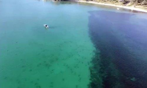 Hàng trăm cá mập bơi gần bờ biển New Zealand
