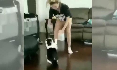Cô gái chịu thua khi bịmèo tấn công