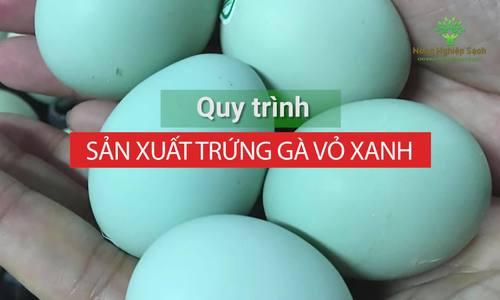 Quy trình sản xuất trứng gà vỏ xanh