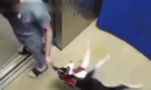 Bị bắt quả tang đánh chó trong thang máy