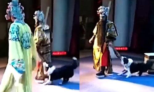 Nam diễn viên khổ sở khi bị chó kéo áo trên sân khấu