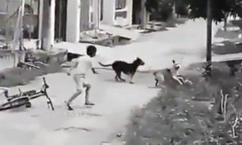 Cậu bé đi xe đạp nhanh trí đối phó khi bị chó đuổi