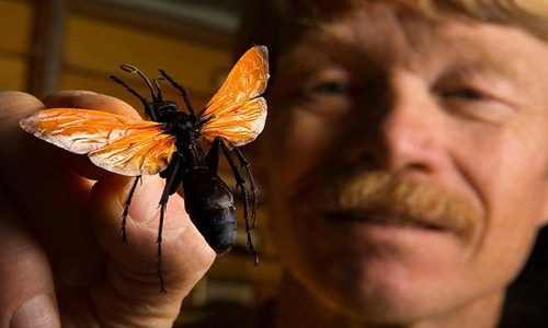 Để côn trùng độc đốt hơn 1.000 lần để khám phá cơn đau