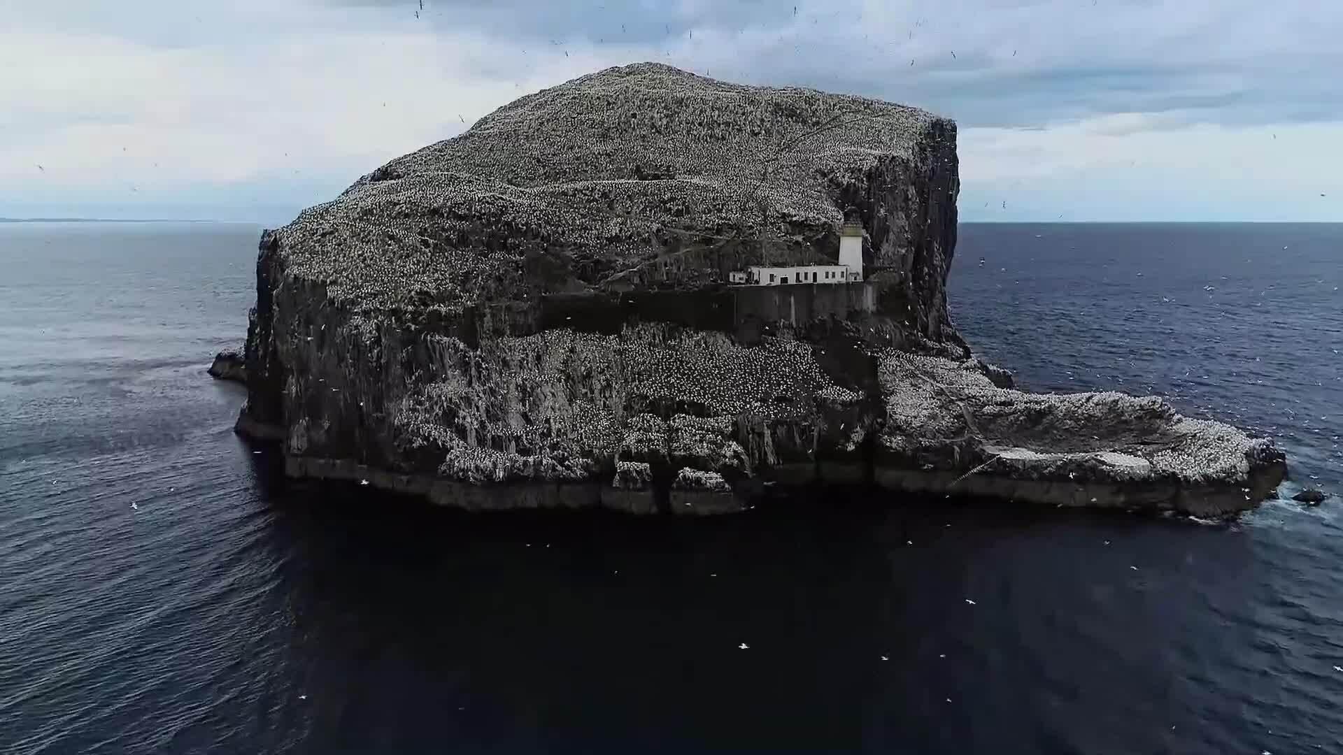 Hòn đảo thiên đường cho loài chim điên