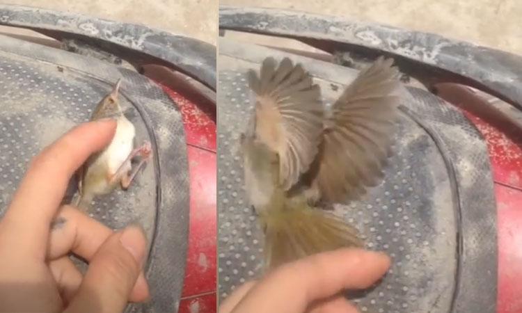 Chim sâu giả chết như thật