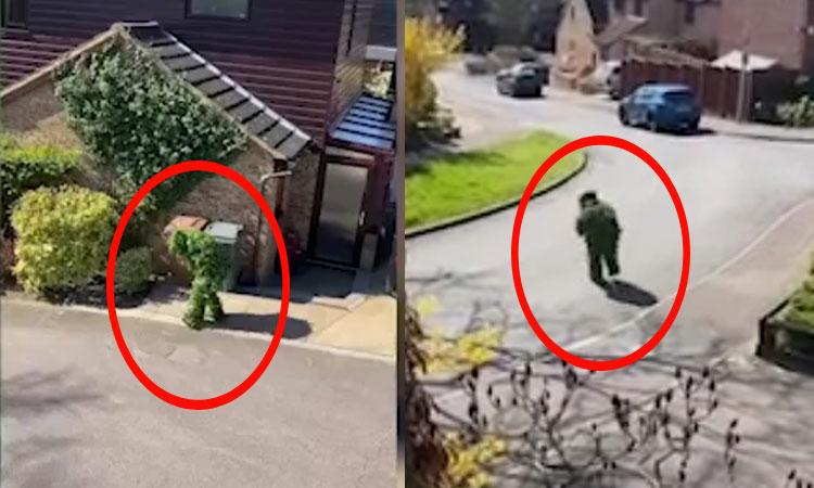 Hàng xóm ngụy trang thành bụi cây để trốn cách ly