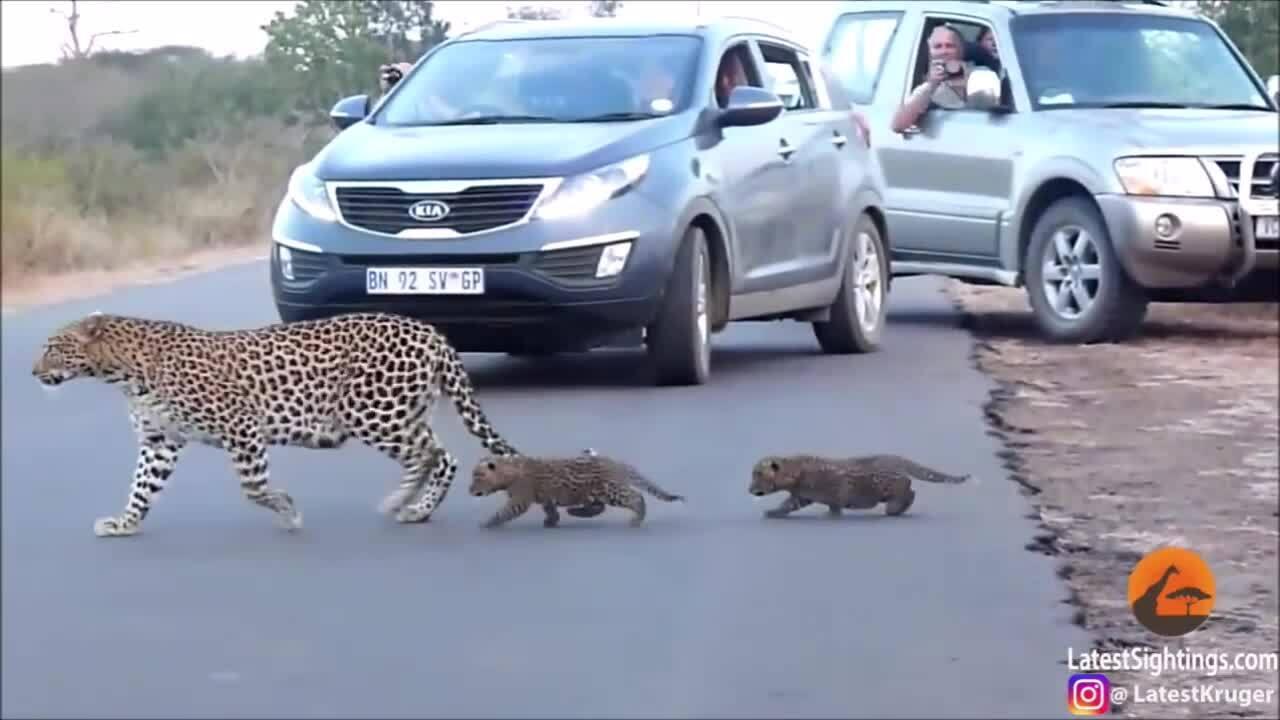 Ôtô dừng bánh chờ mẹ con báo sang đường