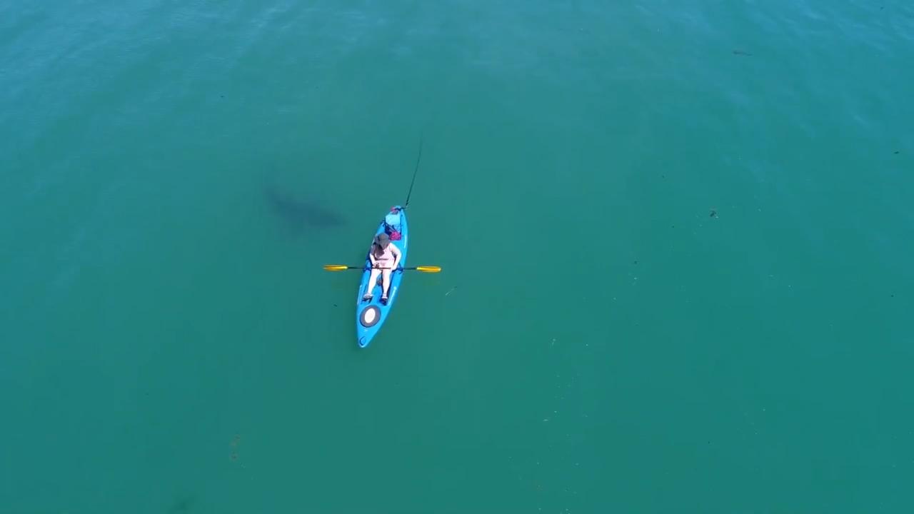 Cá mập trắng lớn áp sát người chèo thuyền