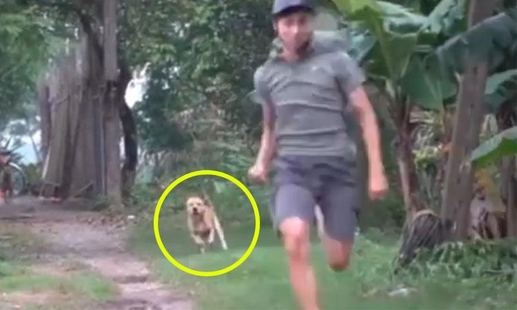 Chạy thục mạng vì chó đuổi