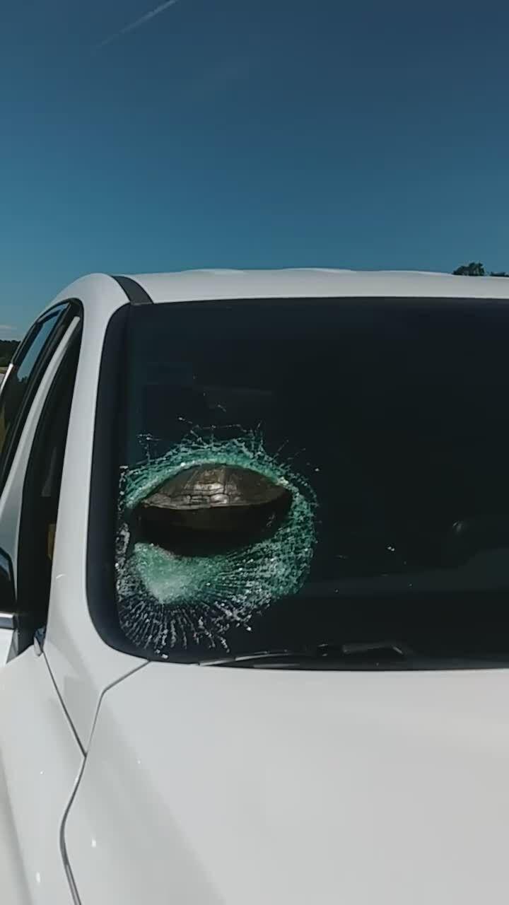 Rùa ghim xuyên kính chắn gió ôtô đang chạy
