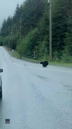Gấu đen đuổi bắt thỏ trước mặt người đi đường