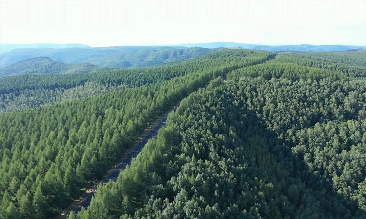 Trung Quốc trồng khu rừng 93.000 hecta ngăn bão cát