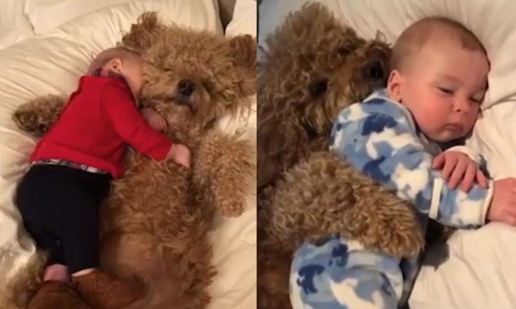 Chó cưng ôm bé trai ngủ ngon lành