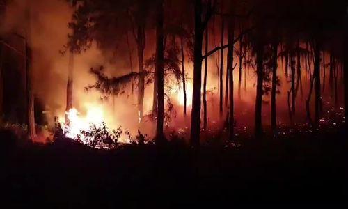 Khống chế thành công vụ cháy rừng ở Nghệ An