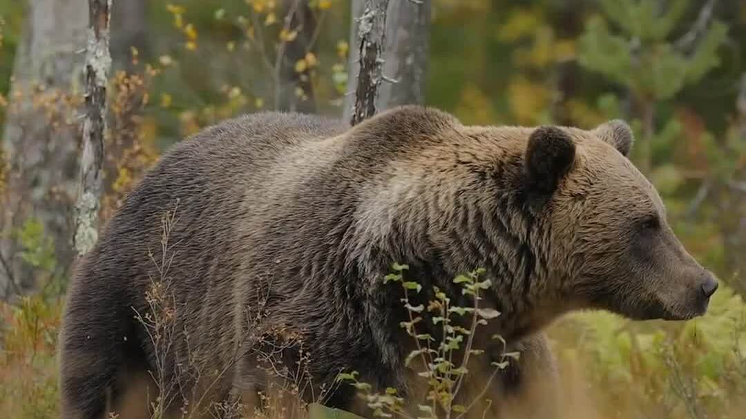 Hành lang động vật hoang dã dài 3.200 km