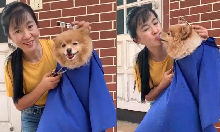 Chó cưng ngồi yên cho cô chủ 'cắt tóc'