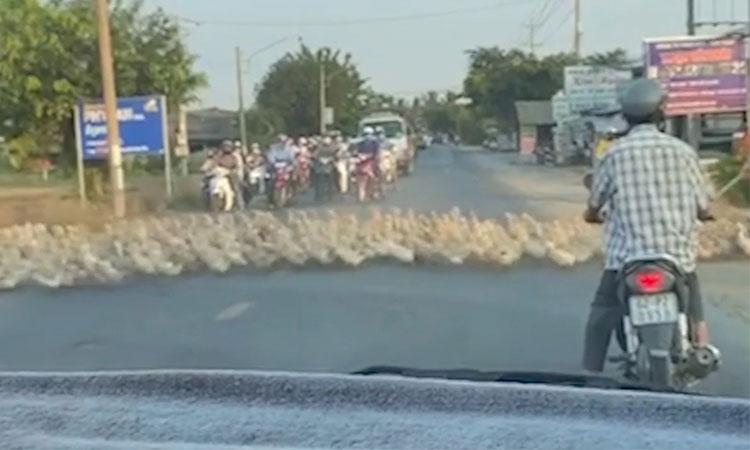 Người dân chờ hàng trăm con vịt qua đường