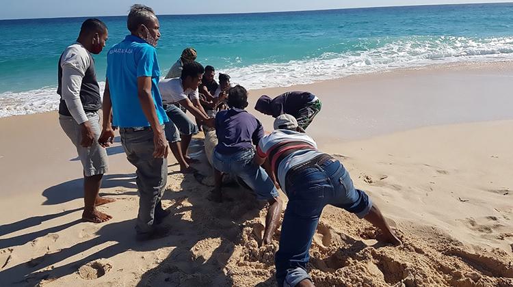 10 con cá voi hoa tiêu chết do mắc cạn