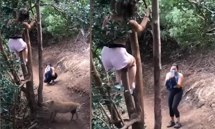Cô gái phấn khích khi bạn bị heo rừng bao vây