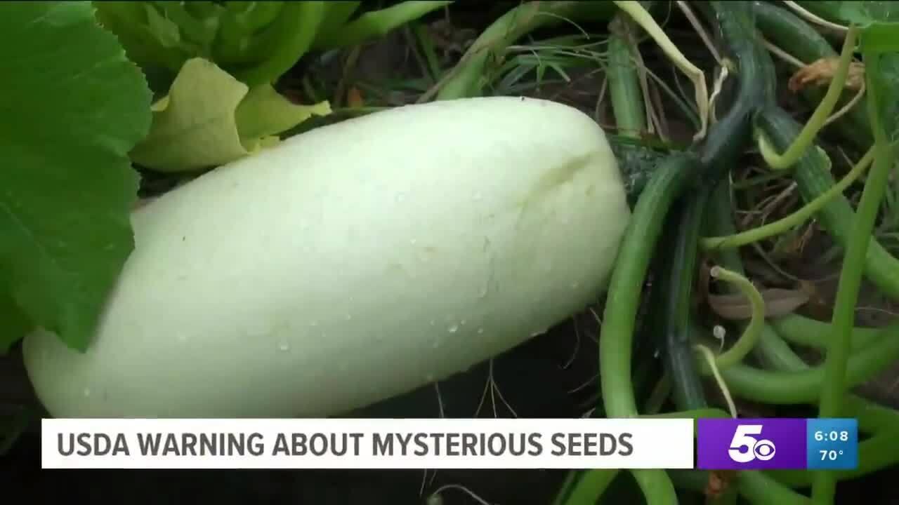 Nông dân Mỹ ngỡ ngàng khi trồng hạt giống gửi từ Trung Quốc