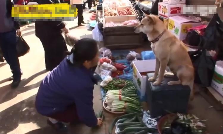 Chó cưng làm 'thương nhân' bán rau ngoài chợ