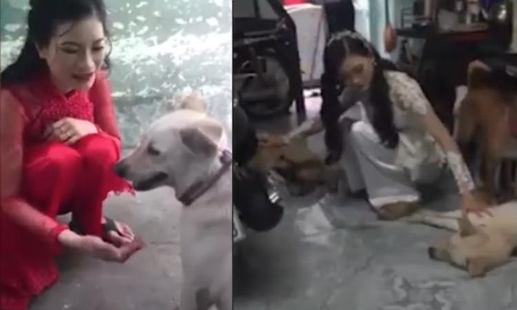 Bốn chú chó giận vì cô chủ lấy chồng