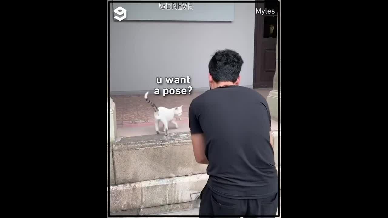 Mèo tạo dáng cho cậu chủ chụp ảnh