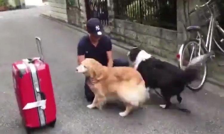 Hai chú chó phấn khích khi cậu chủ về