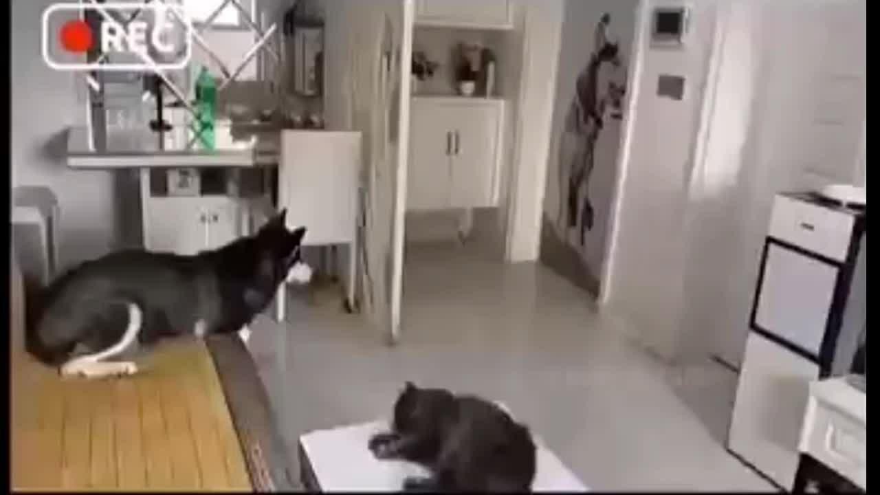 Husky nhận hàng và thanh toán tiền cho shipper giúp chủ
