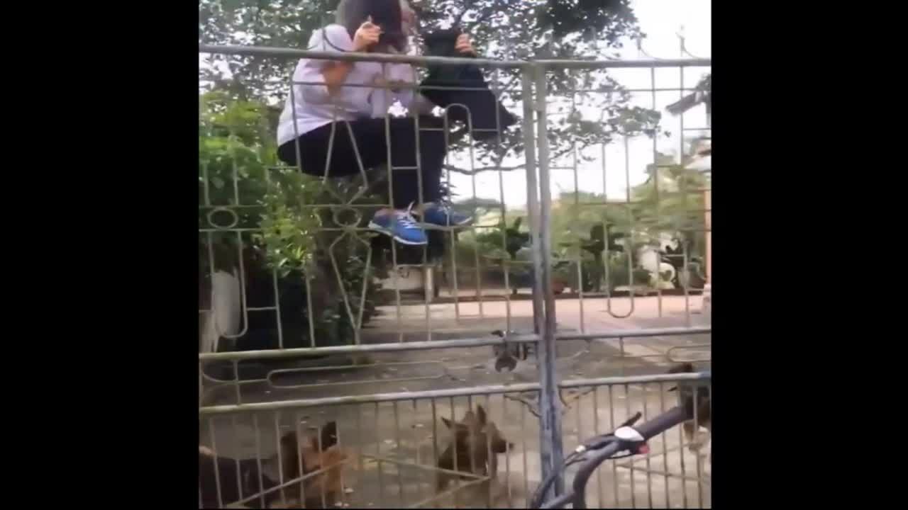 Nữ sinh trèo rào vì sợ chó