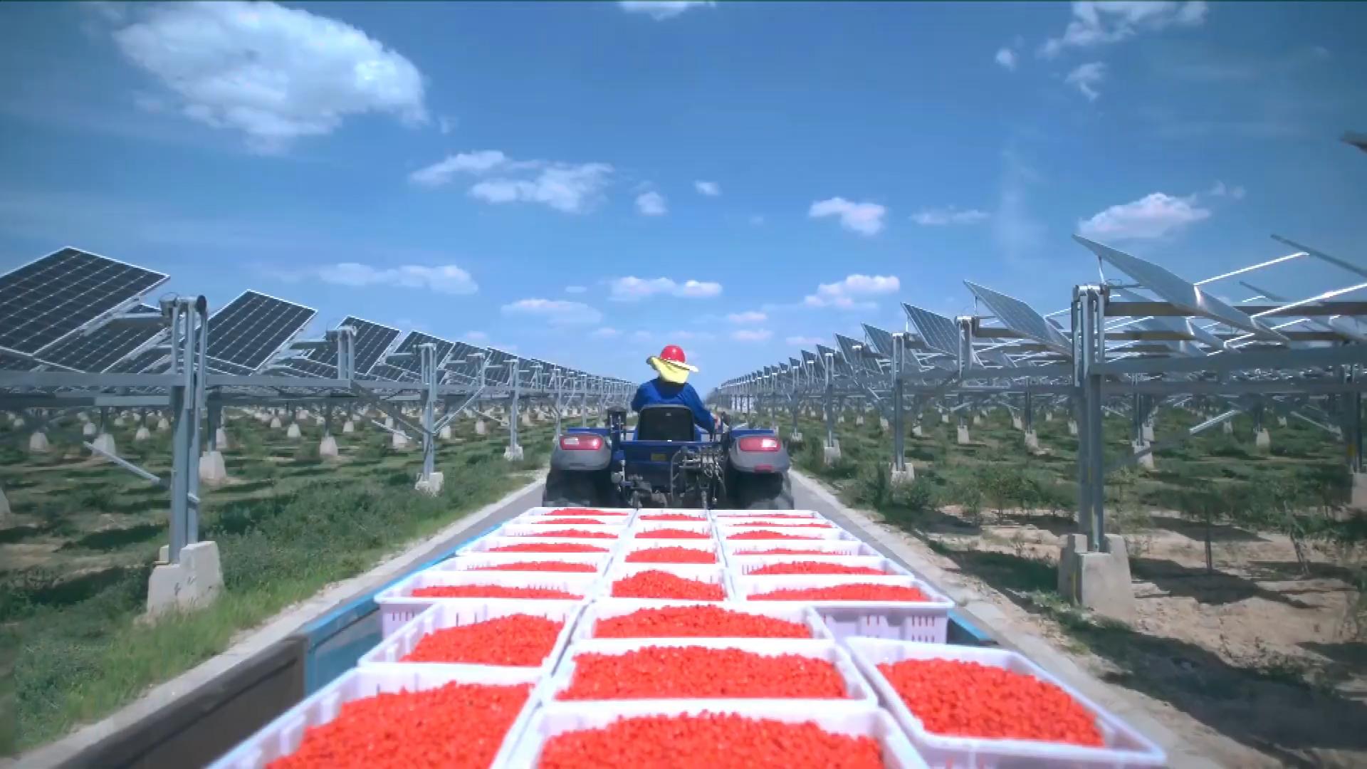 Mô hình điện mặt trời kết hợp với nông trại