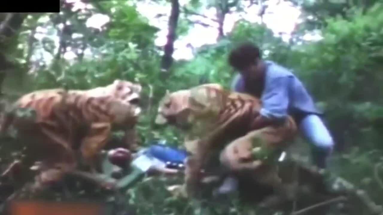 'Võ Tòng đả hổ' phiên bản phim Ấn Độ